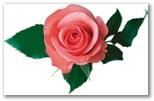 """Полный список товаров на сайте.  Увеличить  """"Роза """" - набор для создания цветов, размер Л - большая."""